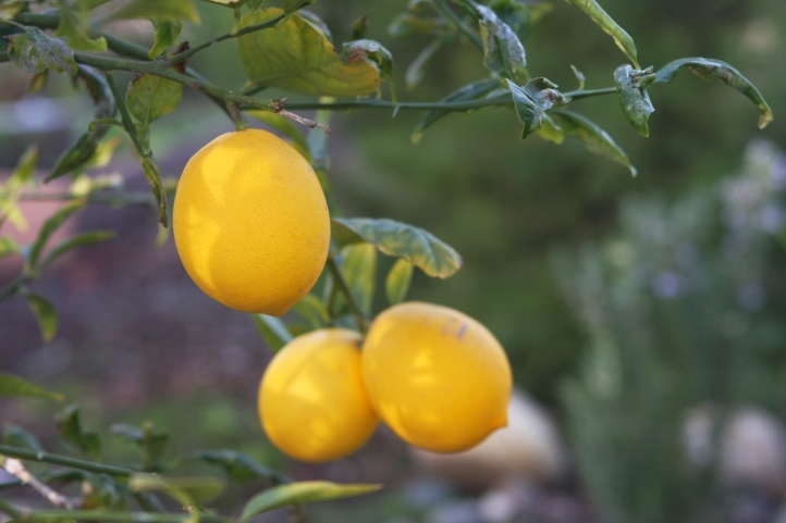 perfect lemons